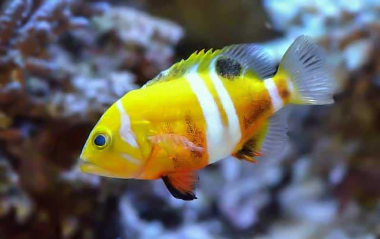 expensive aquarium fishes 2020