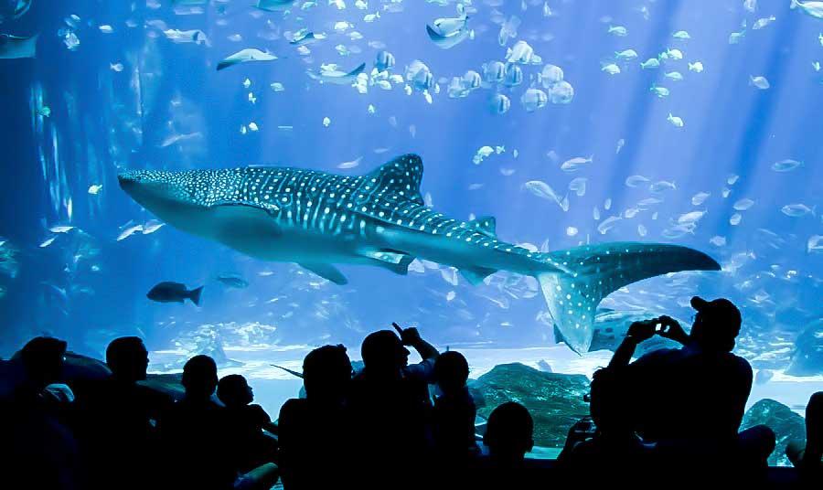 expensive aquarium fishes in the world