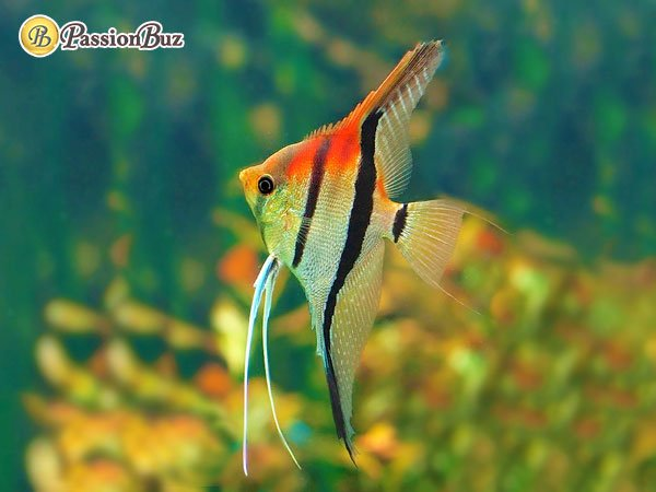 most expensive aquarium fishes 2020