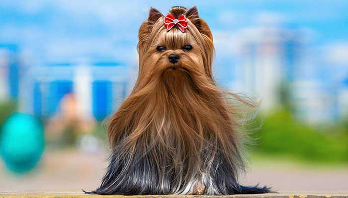 most expensive dog breeds 2021