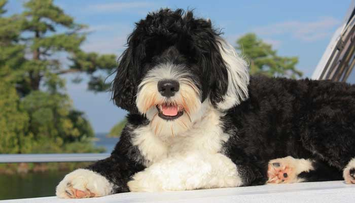 most expensive dog in the world 2021