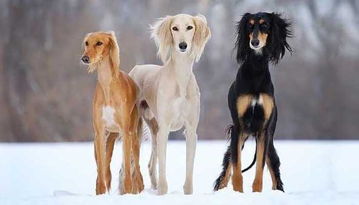 most expensive dog breed in the world 2021