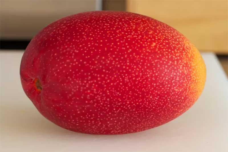 most expensive fruits: taiyo no tamago